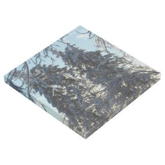Blaue gezierte eisige Kiefer Colorados Galerieleinwand