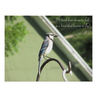 Blaue Jay-Fotografie-Inspirational Zitat-Plakat Poster