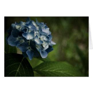 Blaue Karte des Hydrangea-8519