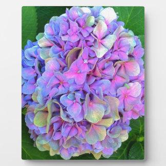 Blaue lila Hydrangea-Blume Schautafel