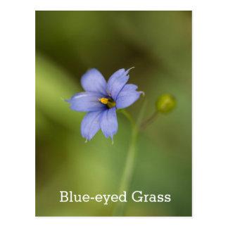 Blaue mit Augen Gras-Wildblume-Blumenpostkarte Postkarte