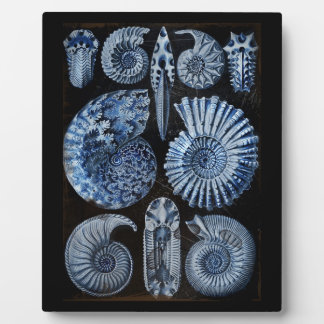 Blaue Muscheln Fotoplatte