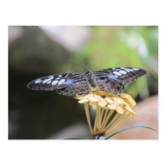 Blaue Scherer-Schmetterlings-Postkarte Postkarte