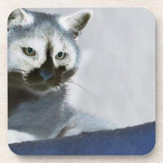 Blaue Schnee-Schuh-Katze auf dem Prowl Untersetzer