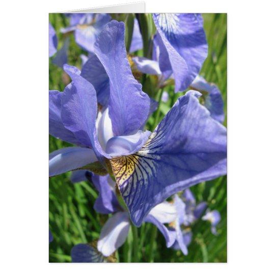 Blauer blauer Iris-Geburtstag Karte