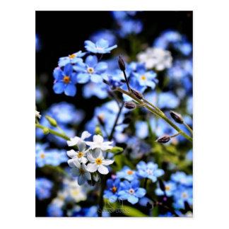Blauer Frühling Postkarten