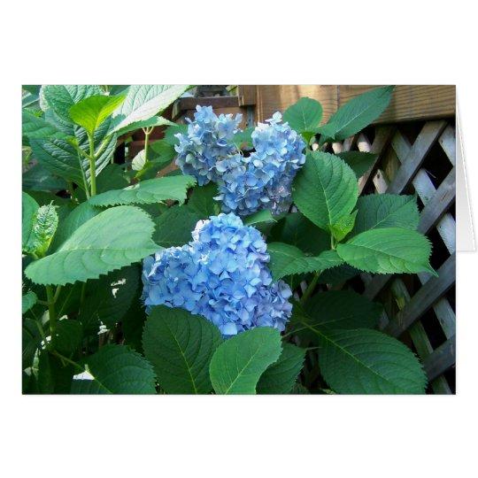 Blauer Hydrangea Grußkarte