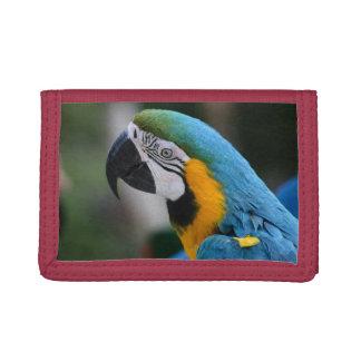 Blauer Macaw-Papageien-dreifachgefaltetes
