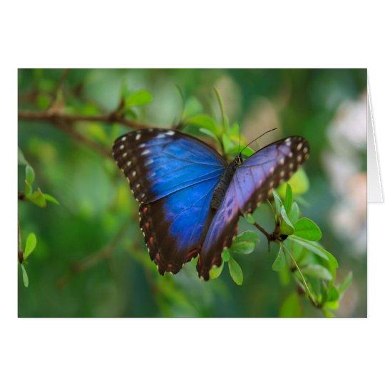 Blauer Morpho Schmetterling Karte