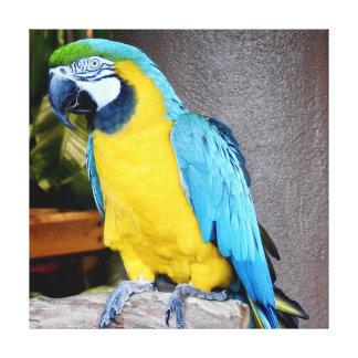 Blauer Papagei Leinwanddruck