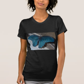 blaues Insekt des Schmetterlinges, das schöne T-Shirt