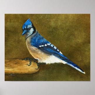 Blaues Jay auf Vogel-Zufuhr Poster