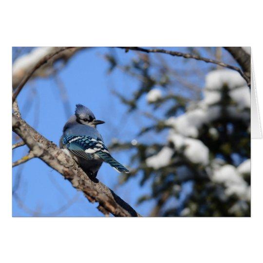 Blaues Jay im Schnee Grußkarte