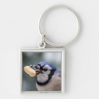 Blaues Jay mit einer Erdnuss Schlüsselanhänger