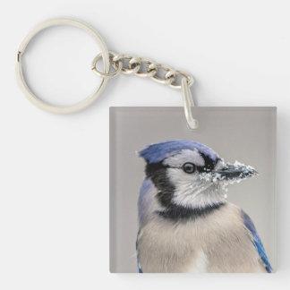 Blaues Jay mit Schnee auf seinem Schnabel Schlüsselanhänger