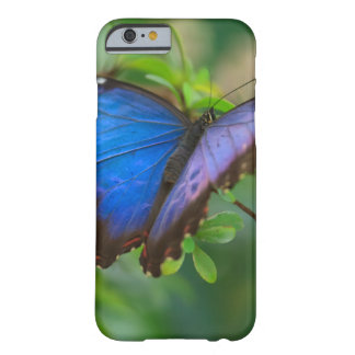 Blaues Morpho Barely There iPhone 6 Hülle
