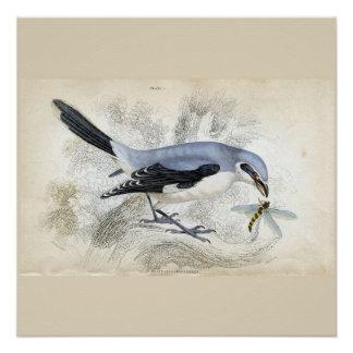 Blaues Vogel-und Libellen-Imbiss-Plakat Poster