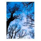 BLUE POWER OF TREE POSTKARTE
