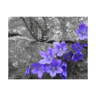 Bluebells auf Felsenzaun Gespannte Galeriedrucke