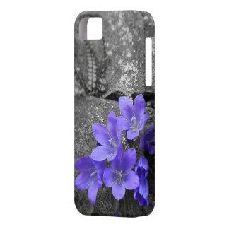 Bluebells auf Felsenzaun iPhone 5 Hülle