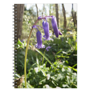 Bluebells-Notizbuch Notizbücher