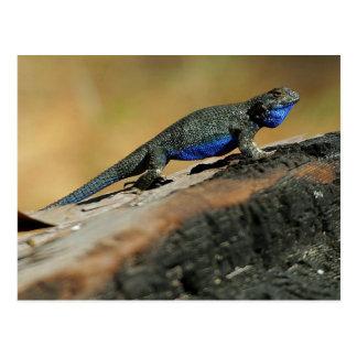 BlueBelly Eidechse Postkarte