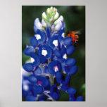 bluebonnet avec l'abeille posters