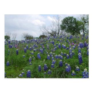 Bluebonnet-Hügel Postkarte