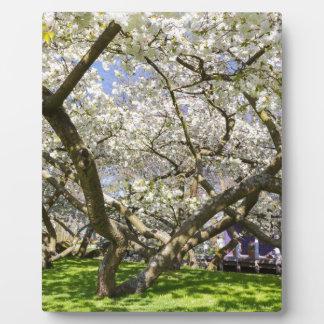 Blühende Bäume mit weißer Blüte im Frühjahr Fotoplatte