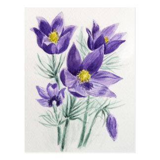Blühende blaue violette pasque Blume im Watercolor Postkarte