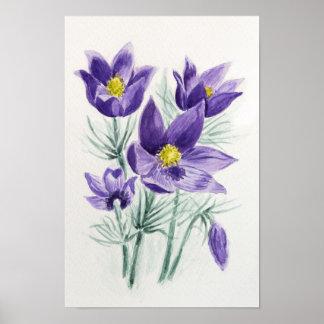 Blühende blaue violette pasque Blume Poster
