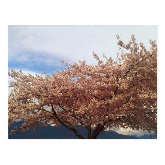 Blühende Kirschbaum-Postkarte Postkarte