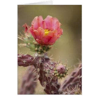 Blühender Cholla Kaktus Karte