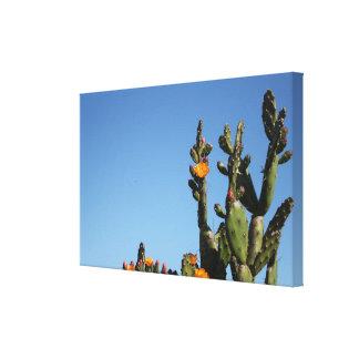 Blühender Kaktus-Pflanze ausgedehnter Leinwanddruck
