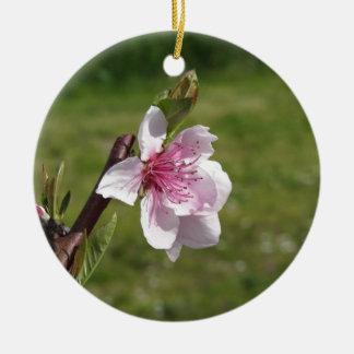 Blühender Pfirsichbaum gegen den grünen Garten Rundes Keramik Ornament