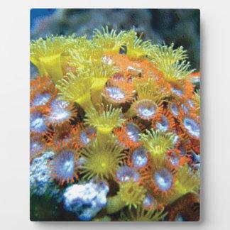 blühender Seefelsen Fotoplatte