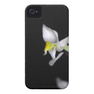Blume der Orchidee Ludisia entfärben iPhone 4 Case-Mate Hüllen