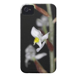 Blume der Orchidee Ludisia entfärben iPhone 4 Hüllen