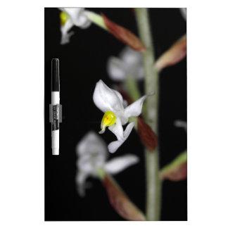 Blume der Orchidee Ludisia entfärben Trockenlöschtafel