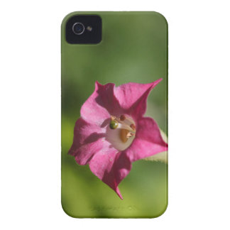Blume des Tabaks (Nicotiana tabacum) Case-Mate iPhone 4 Hülle