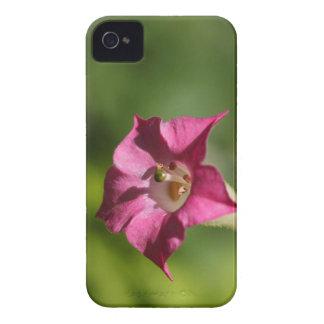 Blume des Tabaks (Nicotiana tabacum) iPhone 4 Hüllen