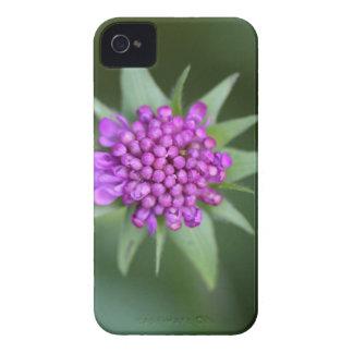 Blume eines Scabiosa lucida iPhone 4 Case-Mate Hülle