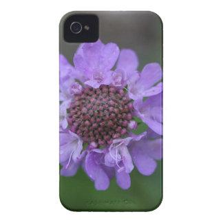 Blume eines Scabiosa lucida iPhone 4 Etuis
