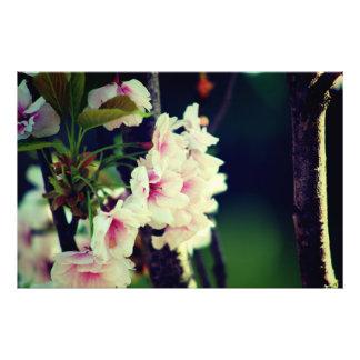 Blume Photo Druck