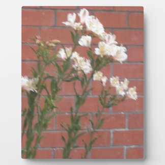 Blumen auf Ziegelstein Fotoplatte