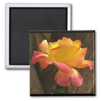 Blumen-Blumengarten-Blüten-Fotografie Quadratischer Magnet