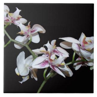 Blumen-Blumengarten-Blüten Keramikfliese
