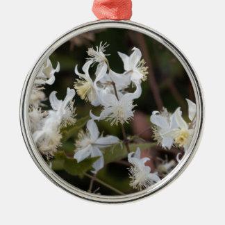 Blumen der Reisend-Freude (Clematis brachiata) Silbernes Ornament