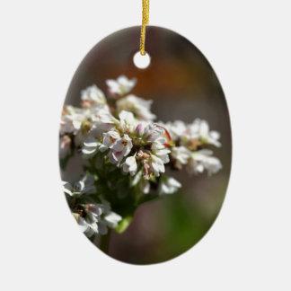 Blumen einer Buchweizen-Pflanze (Fagopyrum essbar Ovales Keramik Ornament