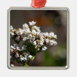 Blumen einer Buchweizen-Pflanze (Fagopyrum essbar Quadratisches Silberfarbenes Ornament